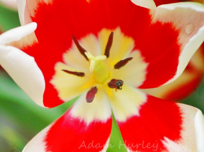 Flower Show HCMC 0102